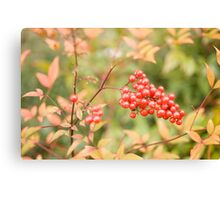red holly berries4 Canvas Print