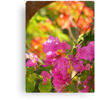 nature colors - colores de la naturaleza Canvas Print