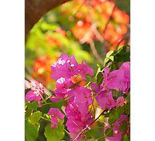 nature colors - colores de la naturaleza Photographic Print