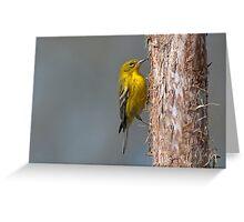 Winter Warbler Greeting Card