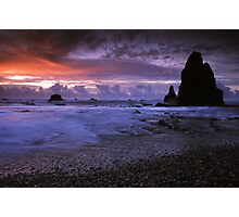 Seal Point, West Coast. Photographic Print