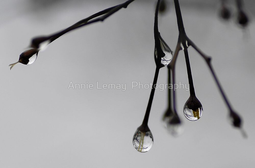 Raindrops in December by Annie Lemay  Photography