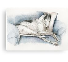 Sleeping Greyhound Canvas Print