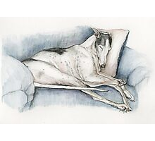 Sleeping Greyhound Photographic Print