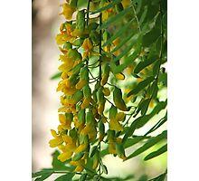 Yellow Droplets Photographic Print