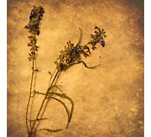 Nature Speaks (without words) Photographic Print