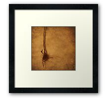 Roots (without words) Framed Print