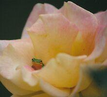 rosefrog3 by RicoR8Art