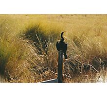 Herring Photographic Print