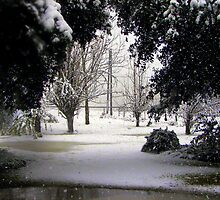We don't get much snow here in Louisiana. by Wanda Raines