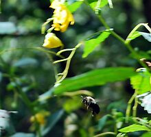 Bumblebee in Flight by Colleen Friedman