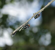 Flys on the End of a Branch by Seone Harris-Nair