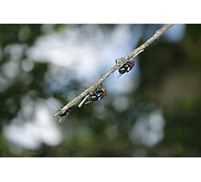 Flys on the End of a Branch Photographic Print