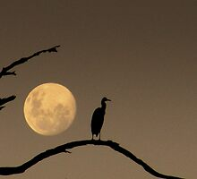 The Heron and the Moon by Sherene Clow