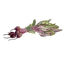 Baby Beetroot by Maureen Sparling