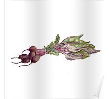 Baby Beetroot Poster