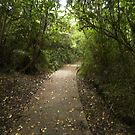 The Path by Luchare