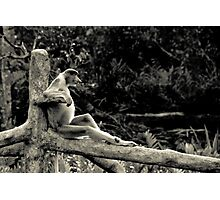 Just Chillin' Photographic Print