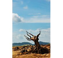 Deforestation Photographic Print