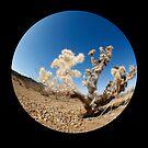 cactus, CA desert by rmenaker