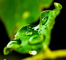 Droplets by Tia Allor-Bailey