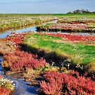 Wetlands 5 by Adri  Padmos
