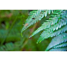 Insect on fern Photographic Print