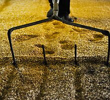 Raking malted barley by Jaime Pharr