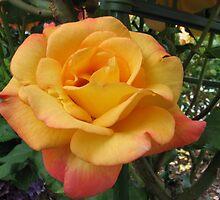 Orange Rose 2 by art2plunder