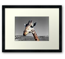 Sticking her neck out Framed Print