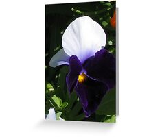 Dark Purple Pansy Greeting Card