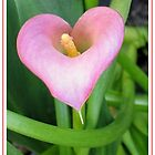Pink Calla Lily by art2plunder