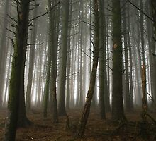 Tree Trunks in Mist by TimbosPics