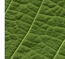 Structure Tilia Leaf by MrFaulbaum