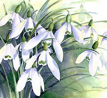 Snowdrops by artbyrachel