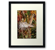 Rich Colors Framed Print