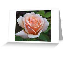 Light Pink Rose Bloom Greeting Card