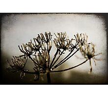 crystallised Photographic Print