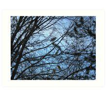 Herons in tree Art Print