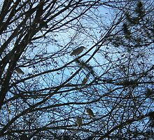 Herons in tree by AuntieBarbie
