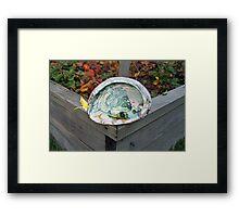 Legal Abalone Framed Print