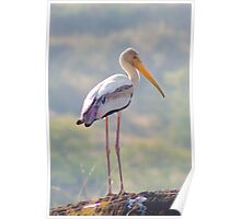 Painted Stork Poster