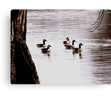 Floating on a Winter River Canvas Print