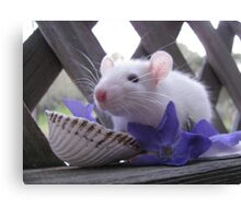 Adventures of Strawberry the Rat Canvas Print