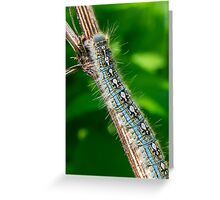 Blue Caterpillar Greeting Card