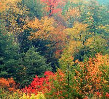 TREES BELOW THE CHIMNEY TOPS,AUTUMN by Chuck Wickham