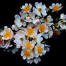 Jasmine by vbk70