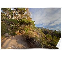 Path in Point Lobos State Reserve, Carmel, CA Poster