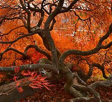 Beautiful Bending Branches by Corinne Noon