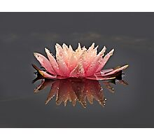 Pink and Rain Photographic Print